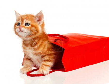 Photo for Cute little red kitten in a shopping bag isolated on white background - Royalty Free Image