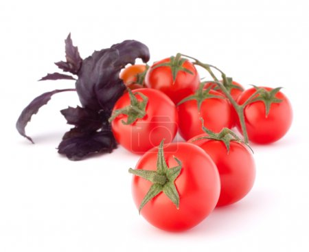 Cherry tomato and basil leaves still life