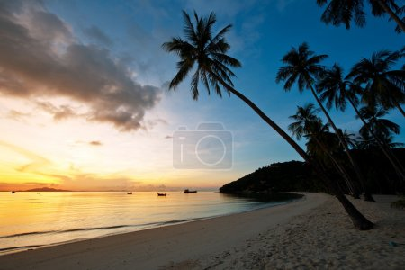 Beautiful sunrise at Beach with palms