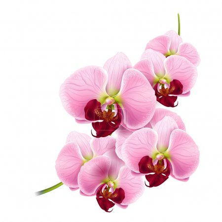 Illustration for Beautiful orchids flowers branch isolated on white background - vector - Royalty Free Image