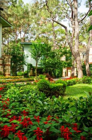 Foto de Yarda verde cerca de la casa - Imagen libre de derechos