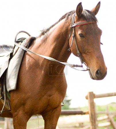 Foal brown horse