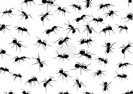 Illustration pour Illustration avec silhouettes de fourmis isolées sur fond blanc - image libre de droit