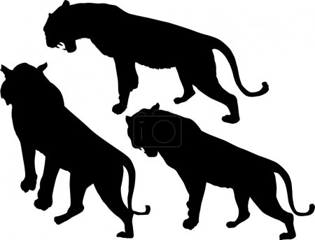 three isolated tiger silhouettes