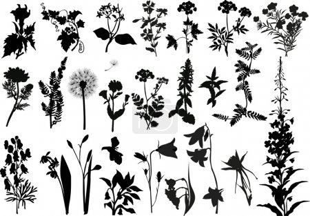 Illustration for Illustration with wild flowers silhouettes isolated on white - Royalty Free Image