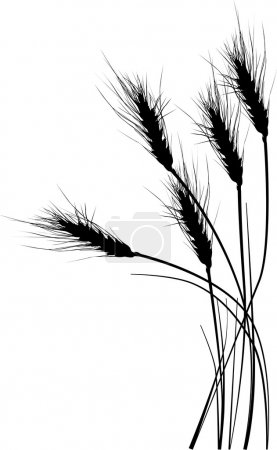 Illustration for Illustration with wheat silhouettes isolated on white background - Royalty Free Image