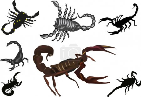 Illustration for Illustration with scorpion collection isolated on white background - Royalty Free Image