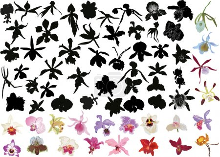 Illustration for Illustration with large set of black and color orchids isolated on white background - Royalty Free Image