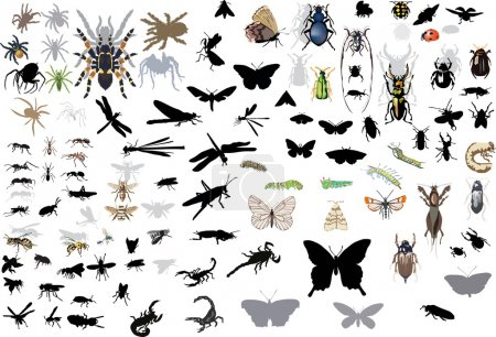large set of isolated insects and spiders
