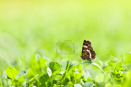 Butterfly on green grass in spring day