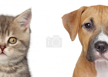 Kitten and puppy. Half of muzzle close up portrait