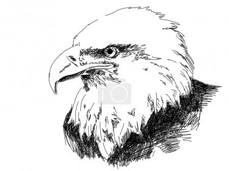 Illustration for Hand drawn eagle vector - Royalty Free Image
