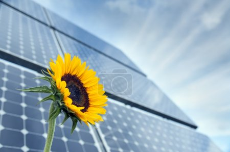 Sunflower and solar panels with sunshine