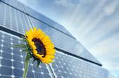 Slunečnice a solární panely se sluníčkem