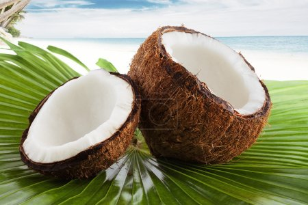 Coconutcoconut