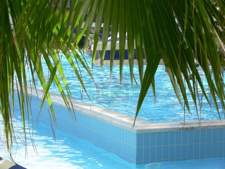 Palm leaves over swimming pool