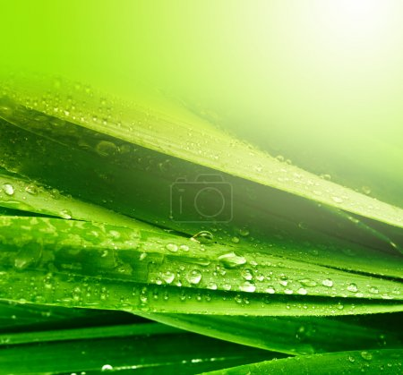 Photo for Grass leaf with water drops - Royalty Free Image