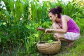 Crescione pennata di donna giovane agricoltore