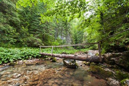 Photo pour Pont en bois traversant un ruisseau dans la forêt - image libre de droit