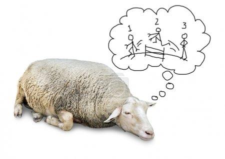 Sleeping sheep counting humans