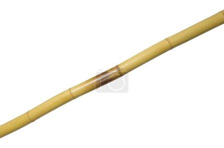 One yellow bamboo