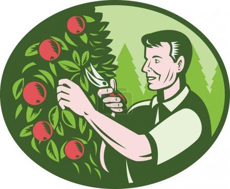 Illustration pour Illustration d'un horticulteur agriculteur cueilleur de fruits taille arbre fruitier verger fait dans le style rétro Woodcut mis à l'intérieur de l'ellipse . - image libre de droit
