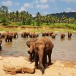 Elephant on Sri Lanka...