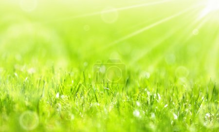 Lush summer green grass