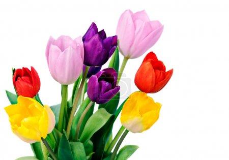 bouquet de fleurs tulip de printemps