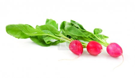 Photo for Three fresh radishes isolated on white background - Royalty Free Image