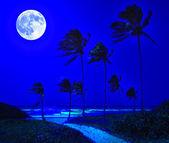 Tropical beach in Cuba at night