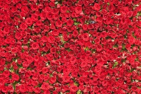 Photo pour Un mur de fond de roses rouges - image libre de droit
