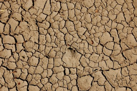 A shot of dry soil on the ground...