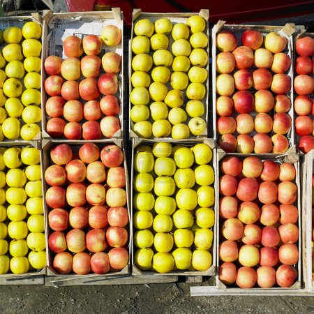 Photo pour Pommes, Serbie - image libre de droit