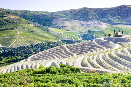 Vineyars in Douro Valley, Portugal...