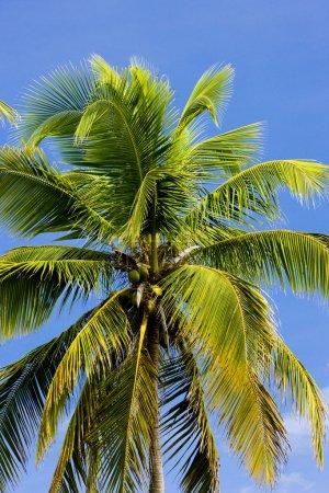 Palm tree's detail, Tobago