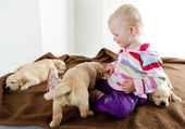 Little girl playing with puppies of golden retriever