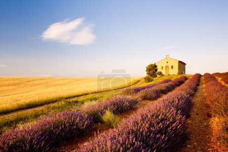 Photo for Chapel with lavender and grain fields, Plateau de Valensole, Provence, France - Royalty Free Image
