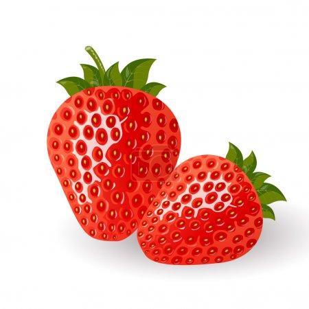 Illustration pour Illustration vectorielle de fraises rouges isolées - image libre de droit