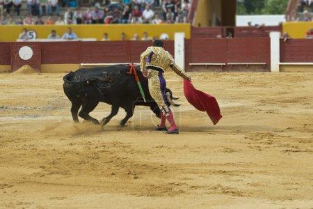 Bullfighter in the bullring.