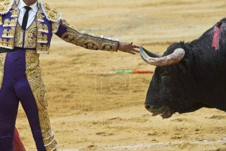 Bullfighter touching the horn of the bull.