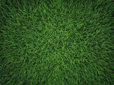 Photo pour Fond de champ de l'herbe verte. vue de dessus, rendu 3d - image libre de droit