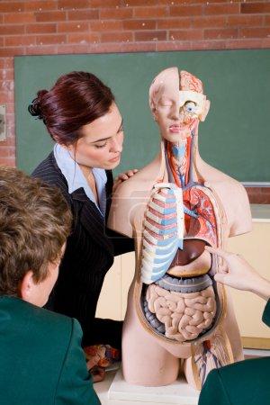 Photo pour Professeur de lycée enseignant l'anatomie humaine en classe - image libre de droit