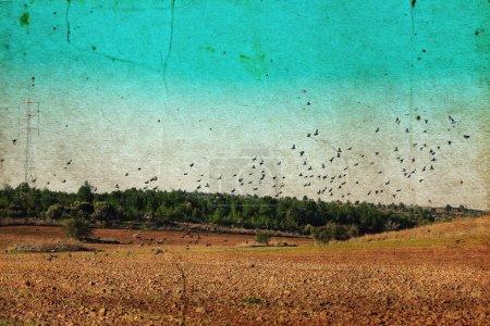 Photo for Flying birds. Photo in old image style. - Royalty Free Image