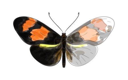 papillon heliconius. imitation de Dessin Aquarelle inachevée