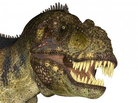 Tyrannosaurus' Head