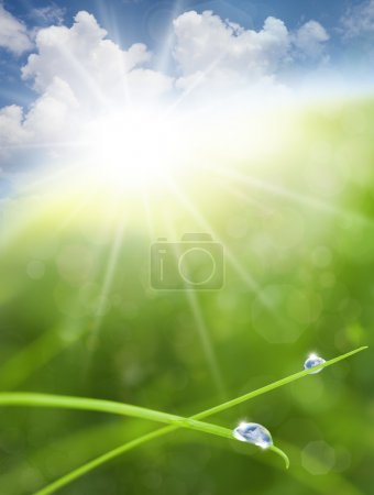 Eco Nature Background with Grass, Sun and Blue Sky Reflections i