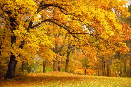 Photo for Autumn / Gold Trees in a beautiful park - Royalty Free Image