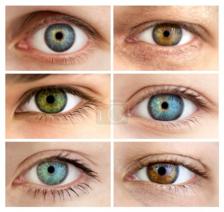 Photo for Set of 6 Real Different Open Eyes / Huge Size / Macro - Royalty Free Image