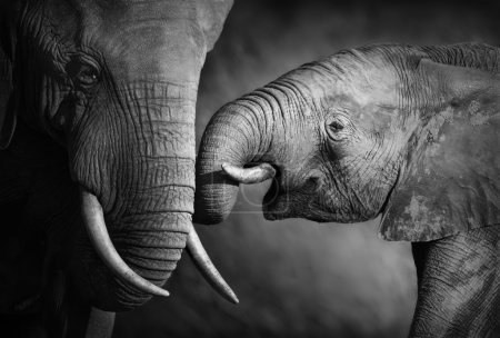 Elephants showing affection (Artistic processing)...